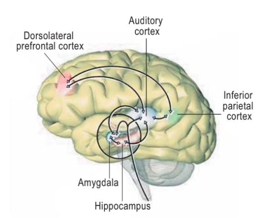 Mengatasi Tinnitus berdasarkanPenyebabnya